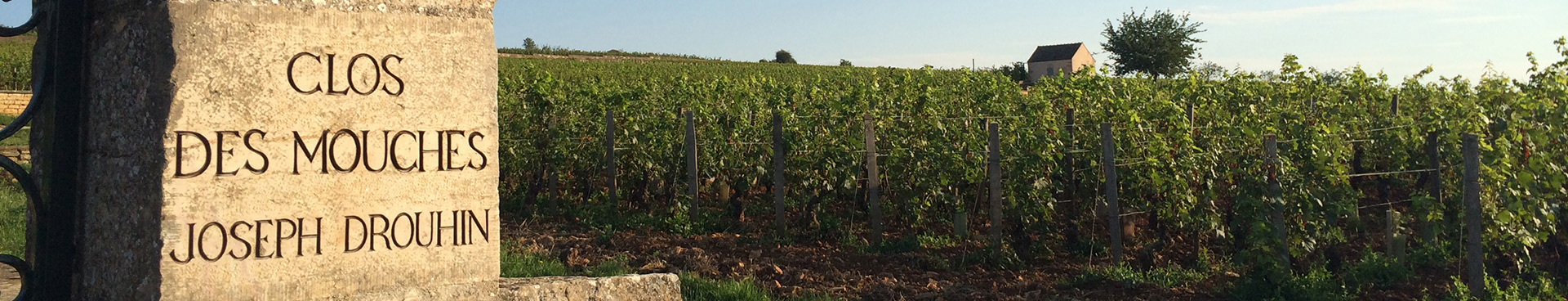 Picture of Joseph Drouhin Clos des Mouches vineyard in Beaune