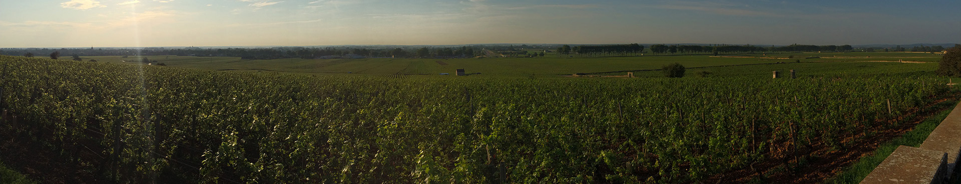 Panoramic image of a vineyard in Burgundy in the sun