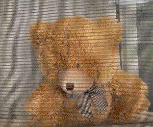 Teddy in window for the bear hunt